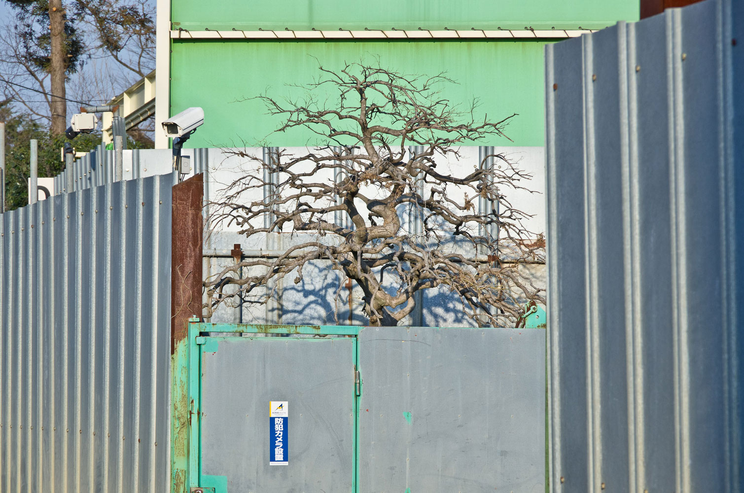 The entrance tree of the junkyard, Kawagoe, Saitama, 2013